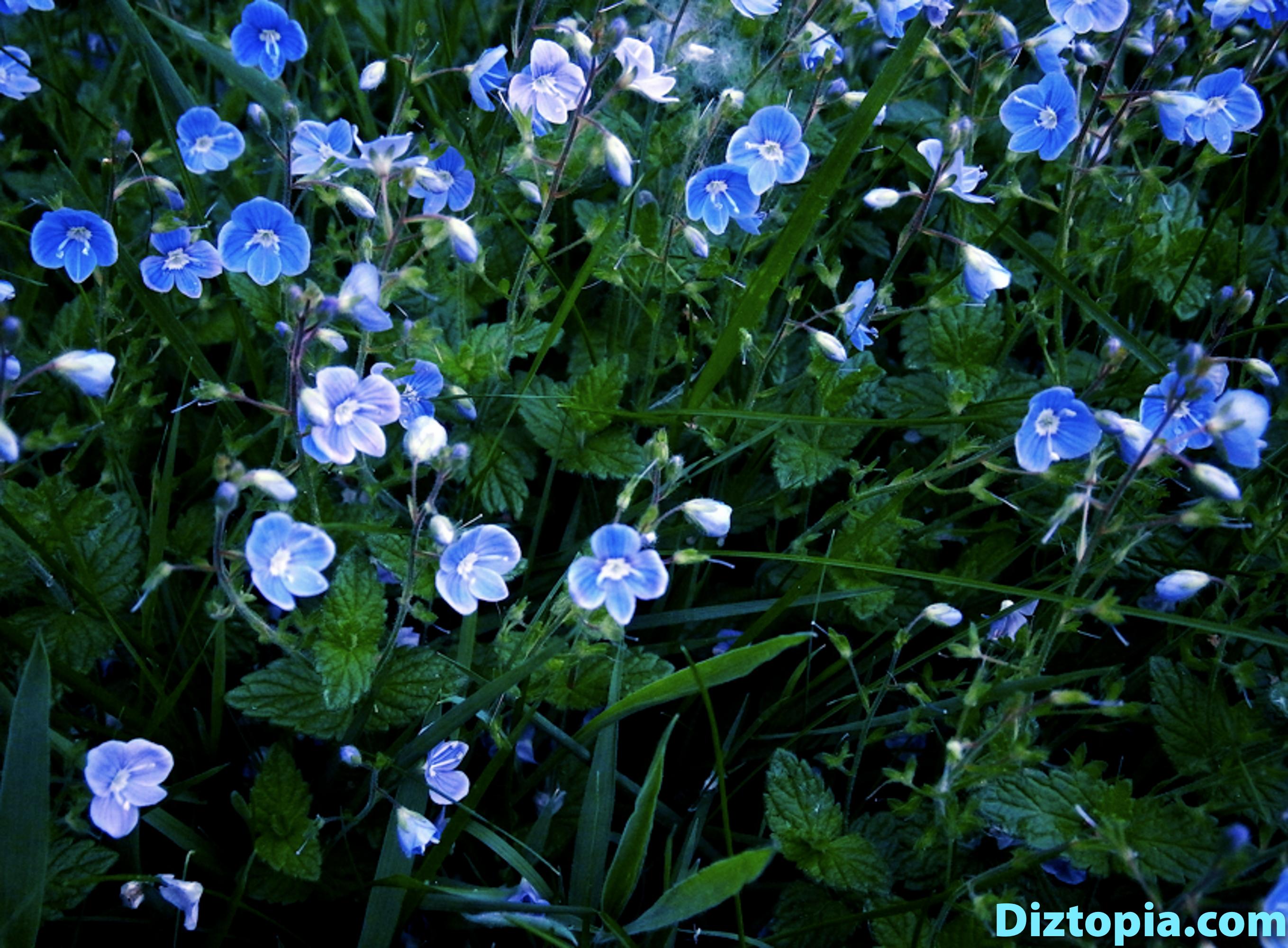 diztopia-com-dizma_dahl-photography-digicam-10