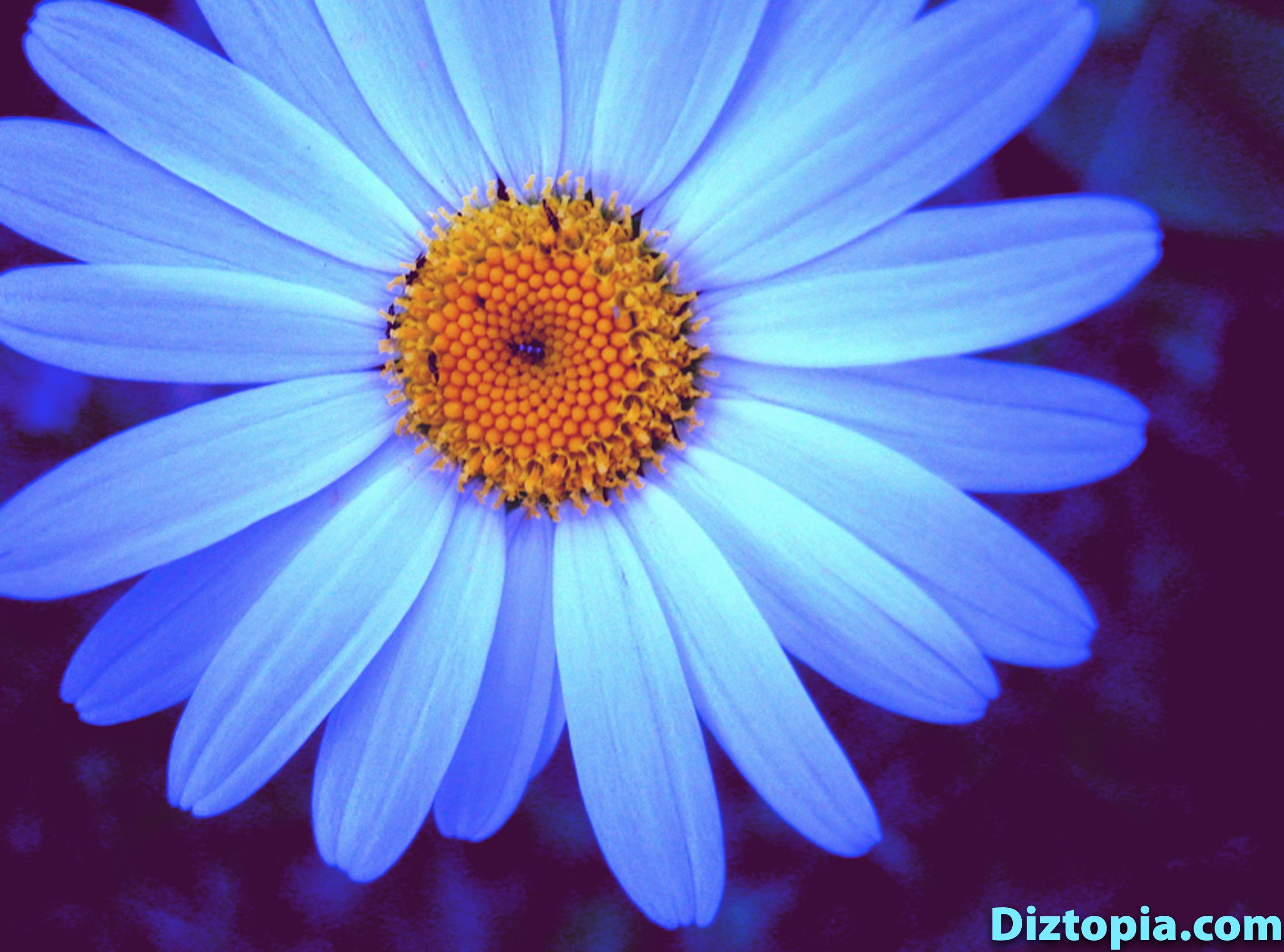 diztopia-com-dizma_dahl-photography-digicam-11