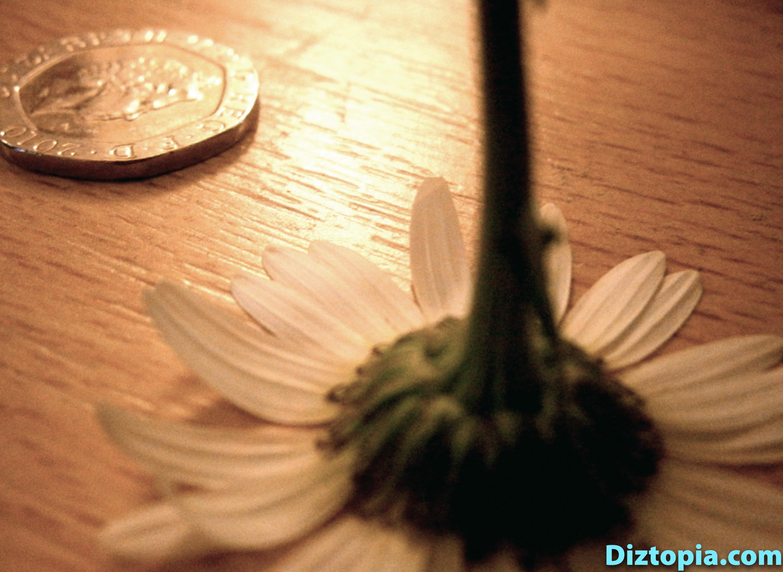 diztopia-com-dizma_dahl-photography-digicam-12