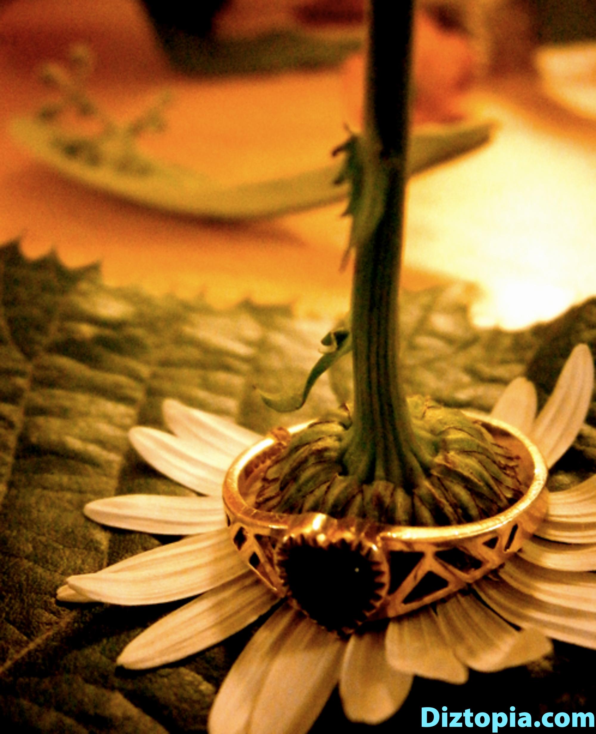 diztopia-com-dizma_dahl-photography-digicam-13