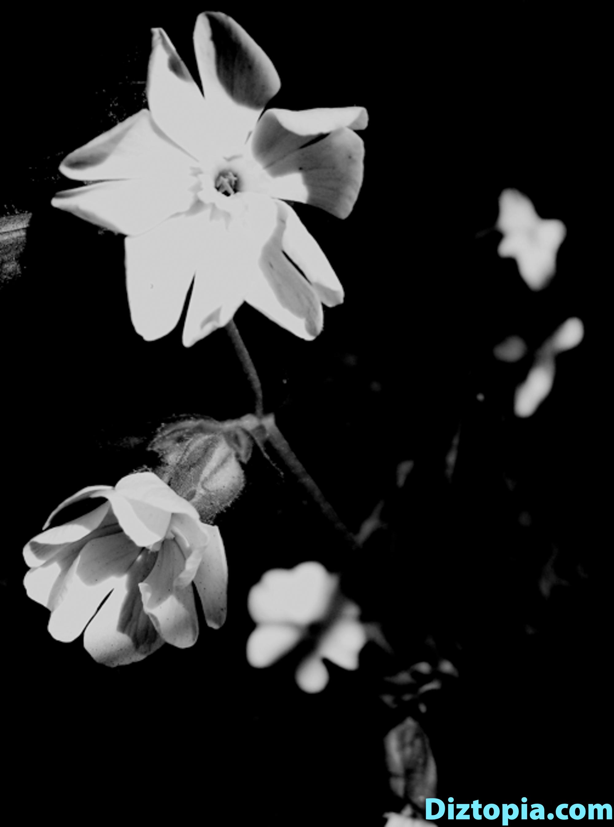 diztopia-com-dizma_dahl-photography-digicam-15