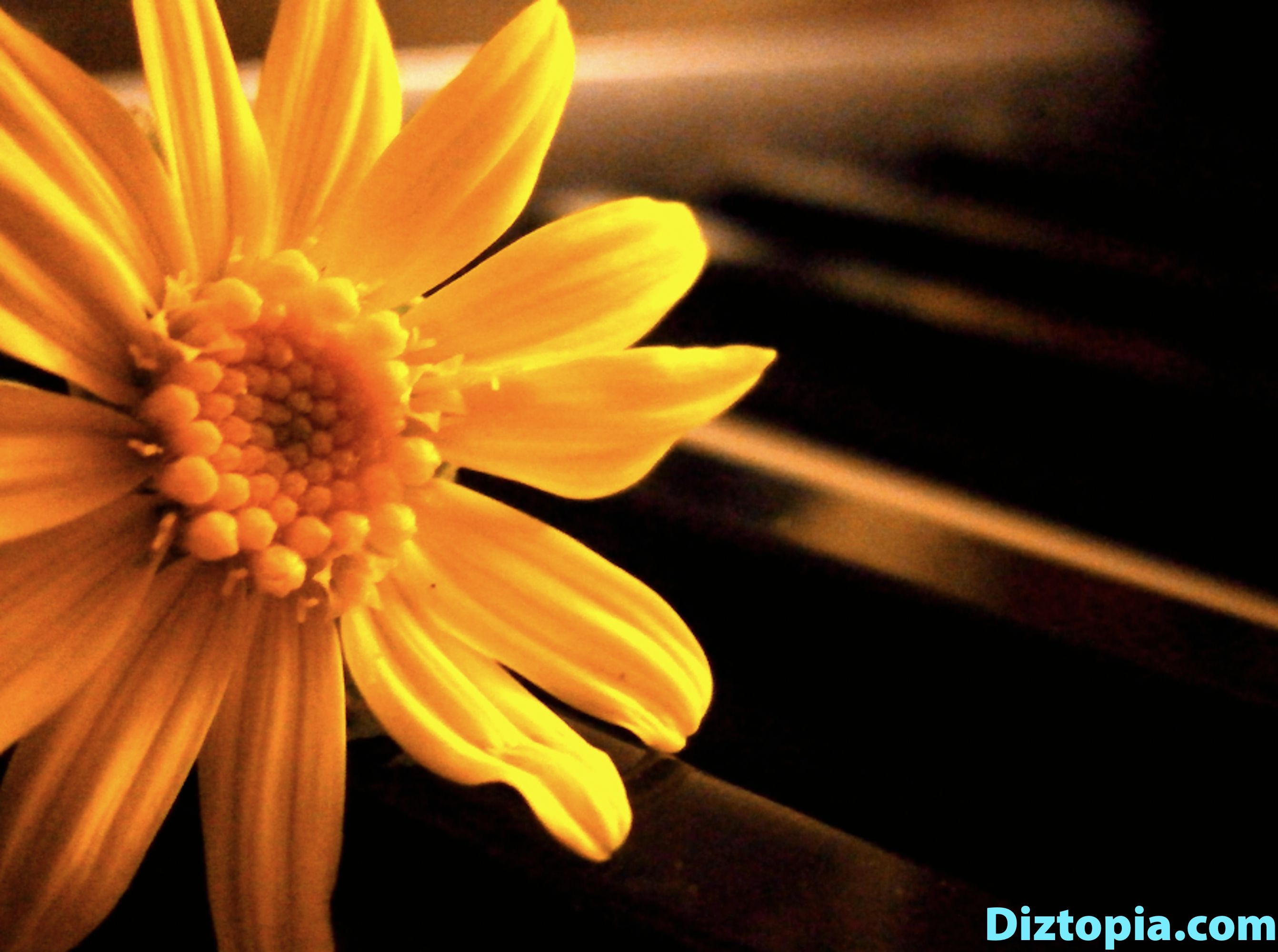 diztopia-com-dizma_dahl-photography-digicam-16