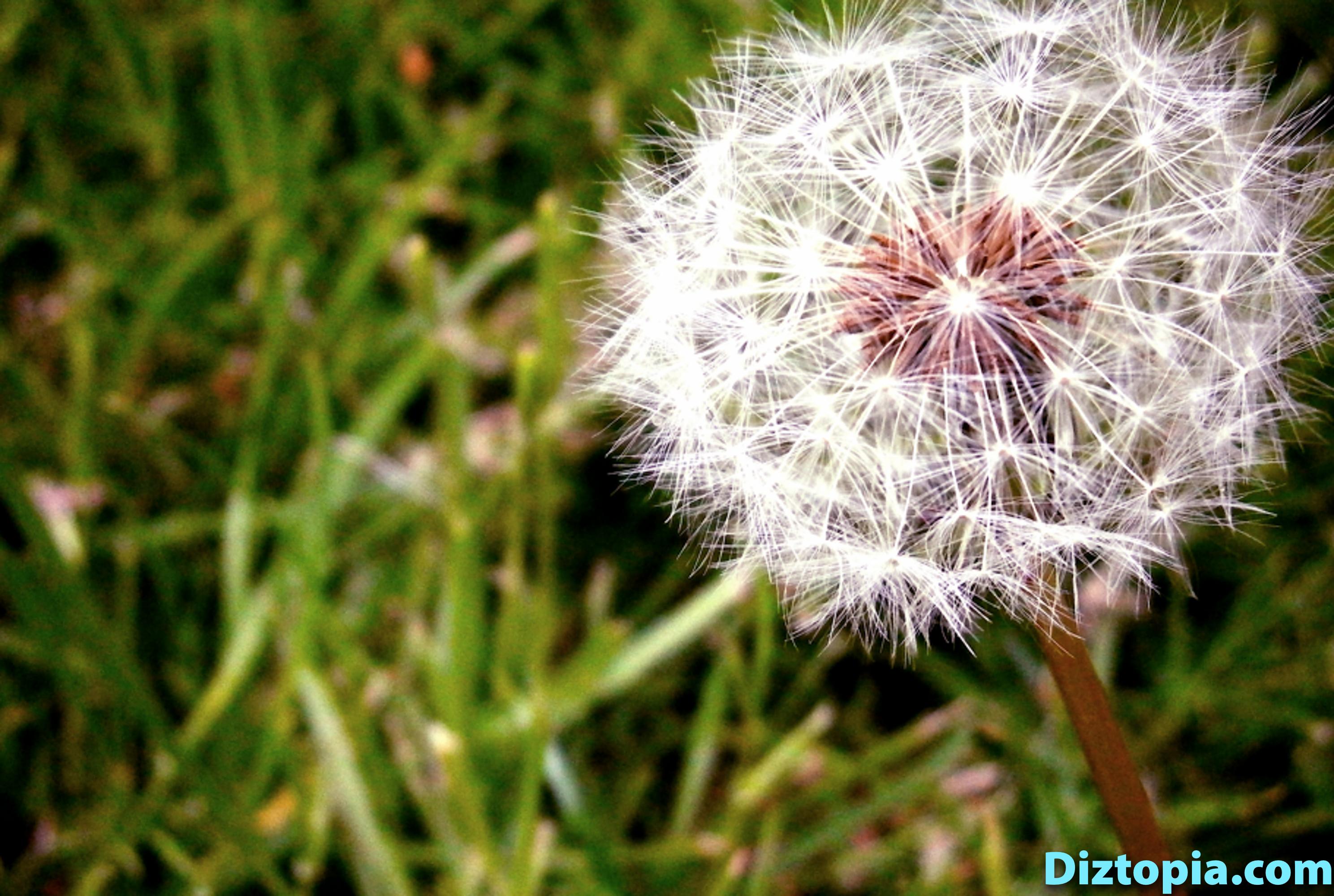 diztopia-com-dizma_dahl-photography-digicam-2