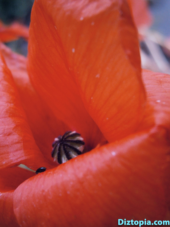 diztopia-com-dizma_dahl-photography-digicam-20