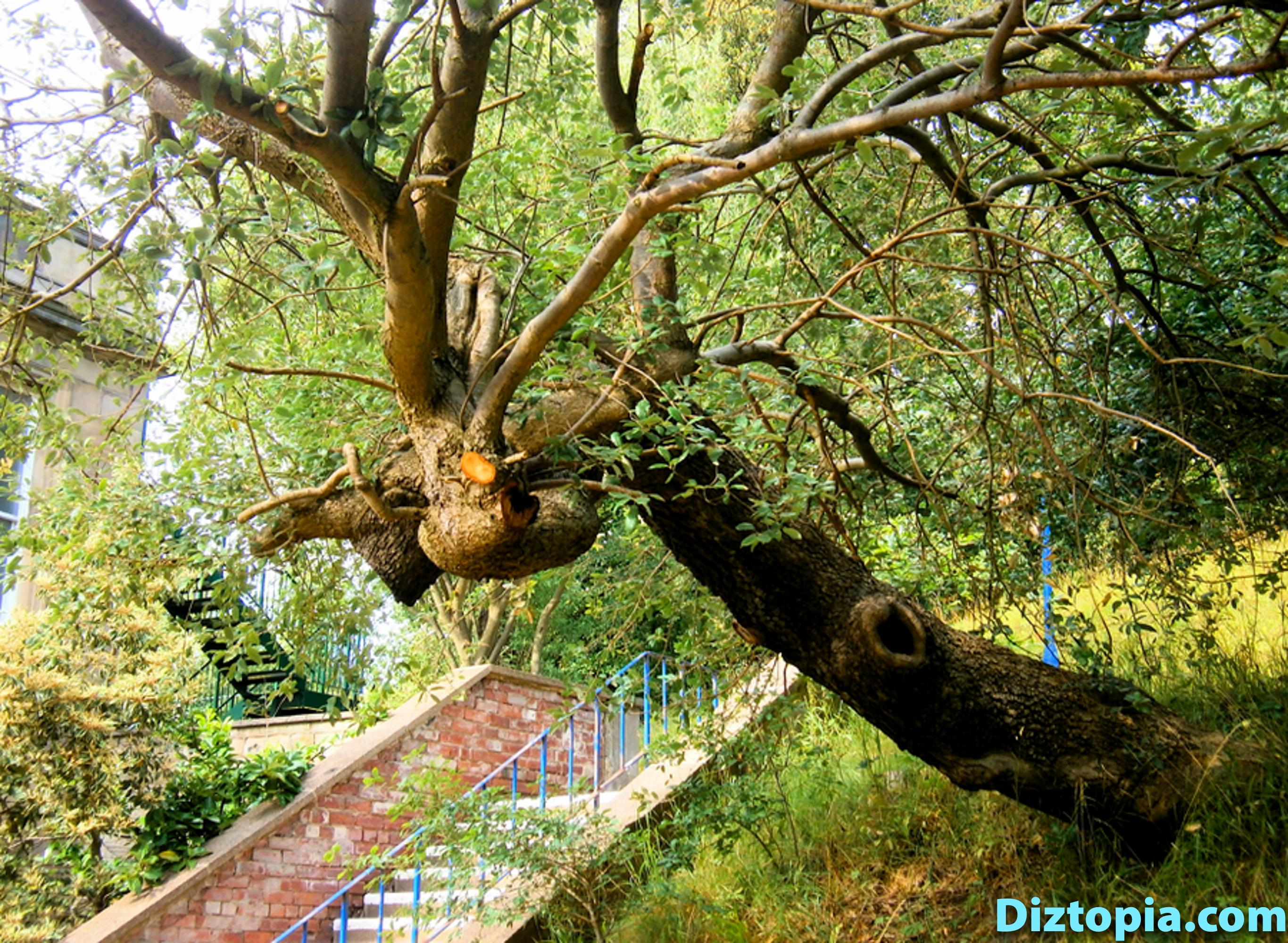diztopia-com-dizma_dahl-photography-digicam-28