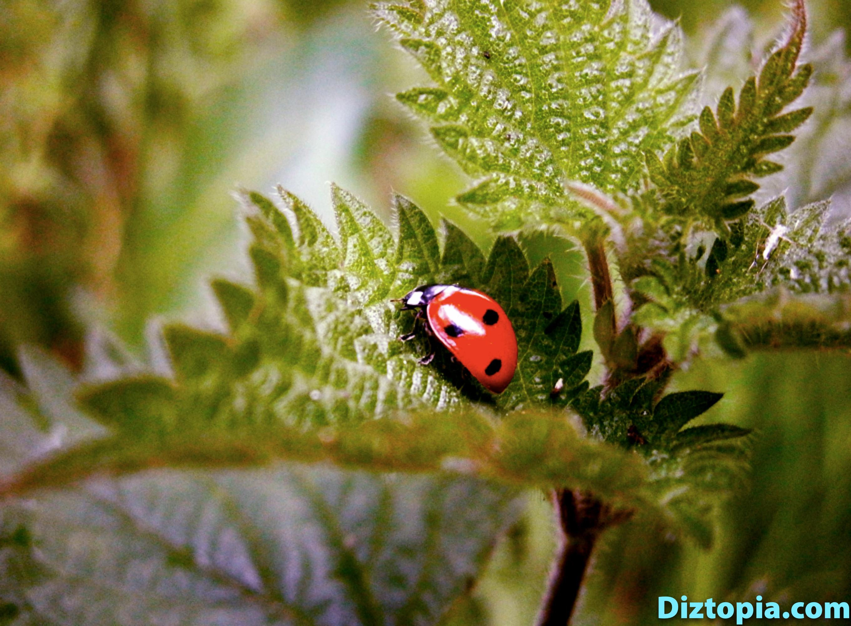 diztopia-com-dizma_dahl-photography-digicam-3
