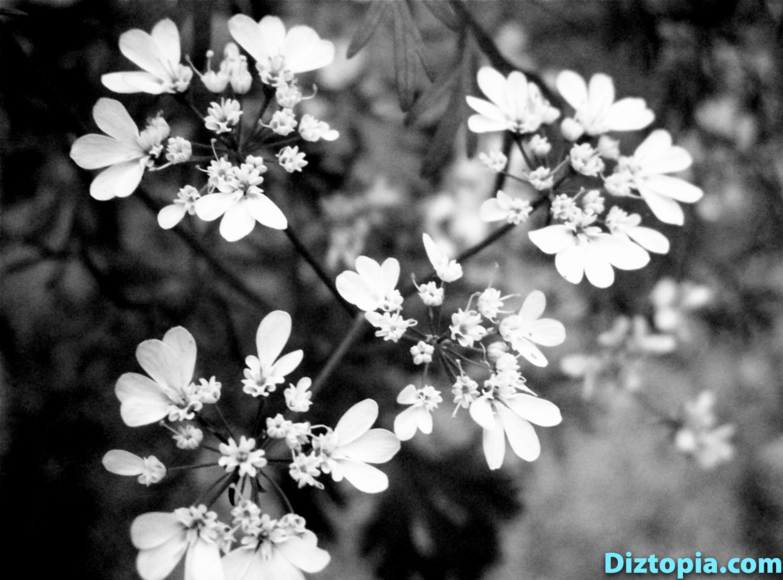 diztopia-com-dizma_dahl-photography-digicam-32