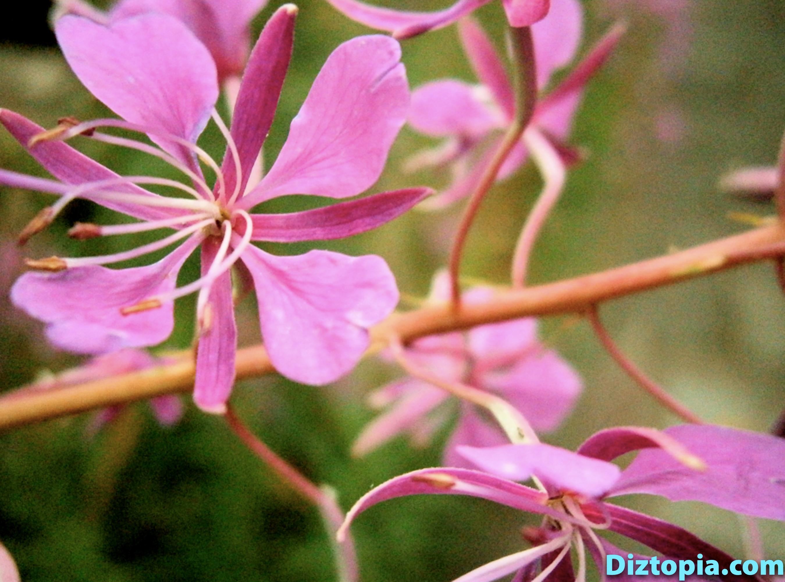diztopia-com-dizma_dahl-photography-digicam-33
