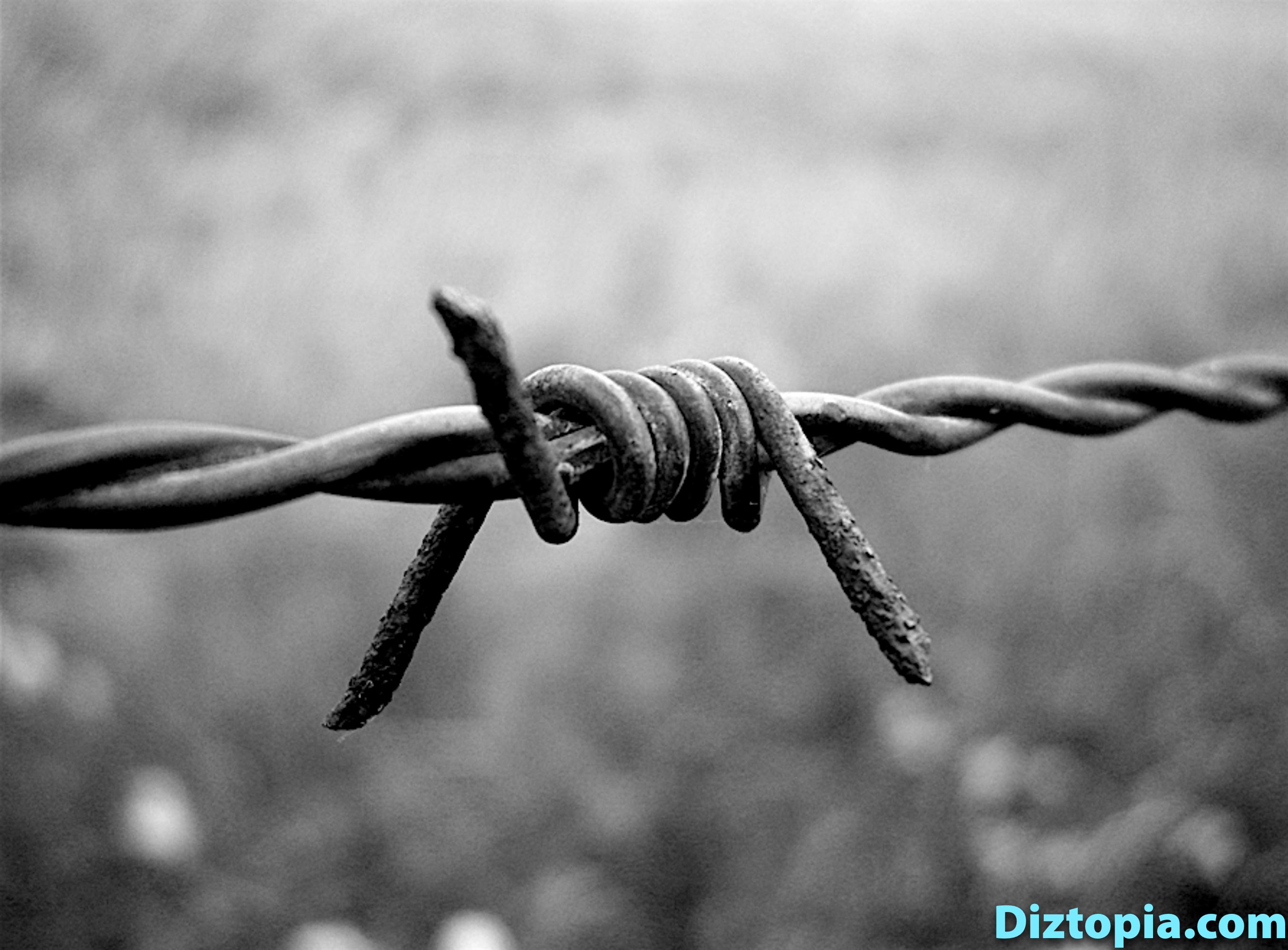 diztopia-com-dizma_dahl-photography-digicam-39