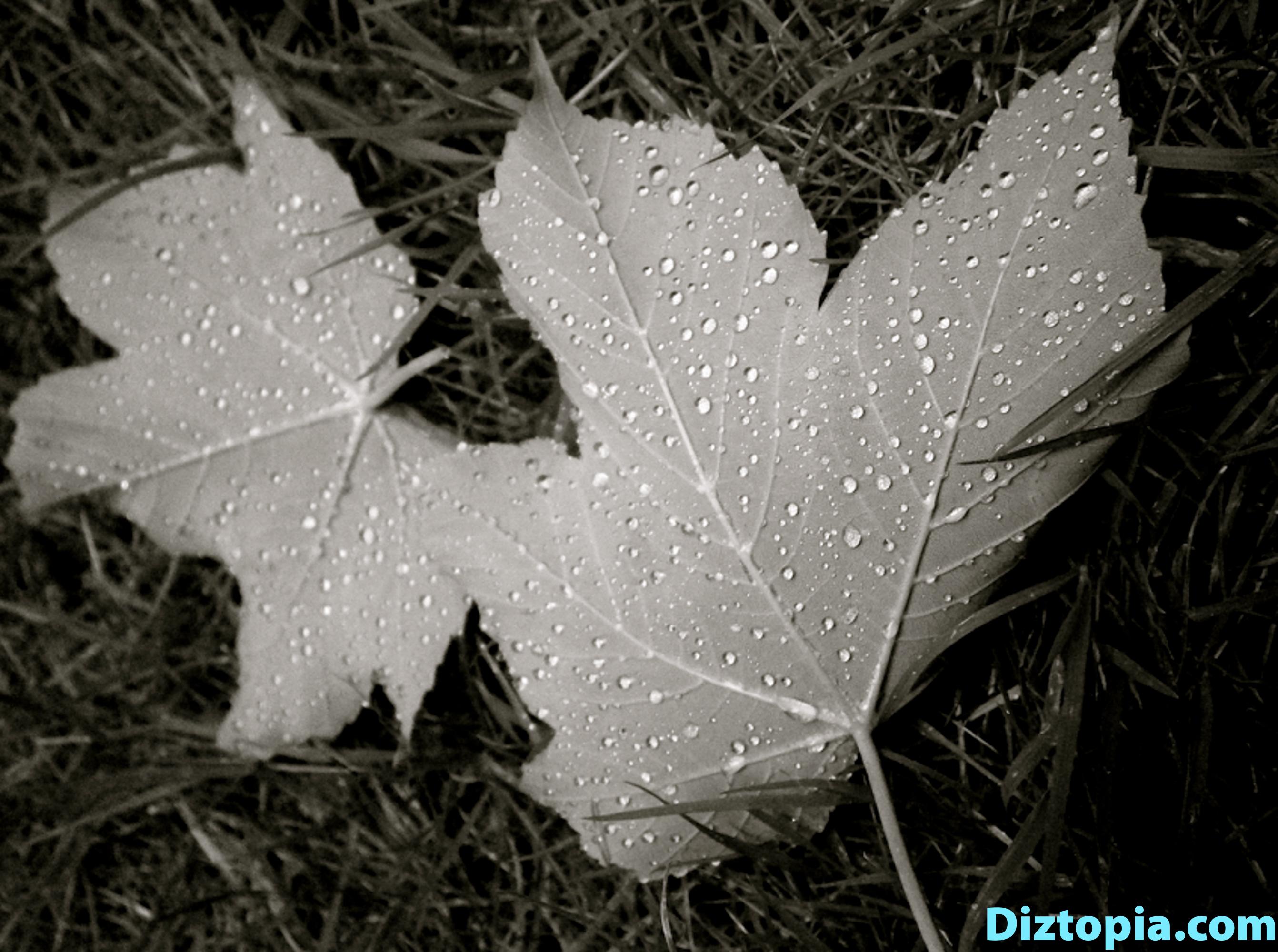diztopia-com-dizma_dahl-photography-digicam-4