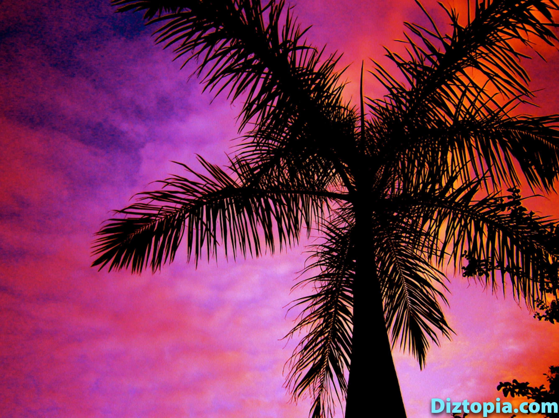 diztopia-com-dizma_dahl-photography-digicam-50
