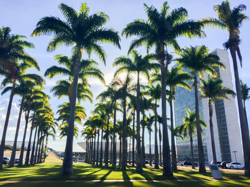 Palm Trees 02_Dizma_Photography