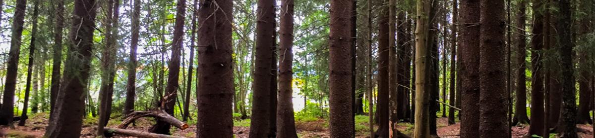 Bråteskogen (Forest) |(Norway)